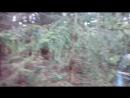 В темно синем лесу..))