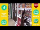 FUNNY ACCIDENT VIDEOS - Fail compilation funny clips monkey - Best Vine - Video Dailymotion