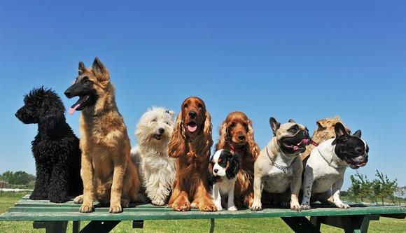 Натура корм для собак