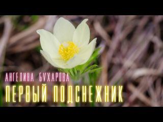 Ангелина Бухарова -  Первый подснежник
