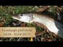 Календарь рыболова 24.04 - 30.04, от Аборигена