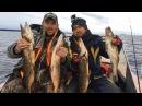 Супер клев Осенняя рыбалка на Ладоге