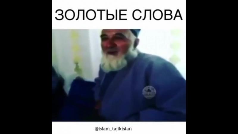 муйсафеди дарддор