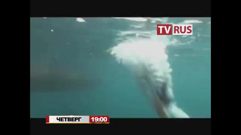 Анонс Т с Бухта пропавших дайверов Телеканал TVRus