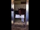 Утро после Belmont Stakes