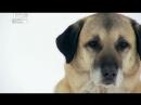 Введение в собаковедение Серия №33
