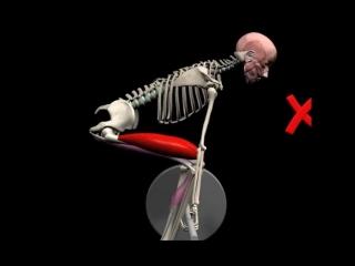 Биомеханика становой тяги