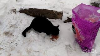 Черное Хвостатое Пятно на Снегу )