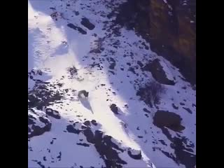 Imagine being so hungry you are jumping off cliffs to catch your food. 🐆 😧 - watch till the end !👍 