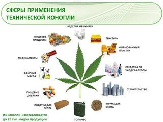 Екатерина владимировна конопля вид марихуаны