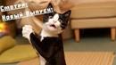 Приколы про животных Смешное видео про котов, собак и не только Такого Вы еще не видели! Выпуск 13