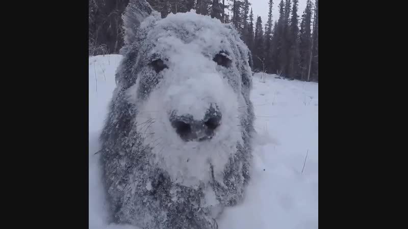The joy of the dog is snow a alegria do cachorro é a neve la alegría del perro es la nieve...