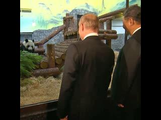 Путин и Си Цзиньпин посетили павильон для панд в Московском зоопарке