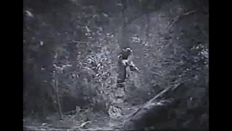 ТАРЗАН ТИГР 7 серия США 1929
