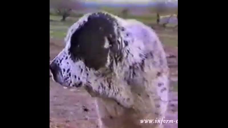 Есер, правнук Черного Екимена. Туркмения, 90-ые годы.