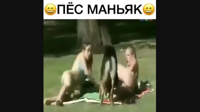 ПЕС МАНЬЯК ꒰╬•᷅✌ ПРИКОЛ🌻🍃🍃