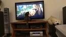 Прикол с котом (смотреть со звуком)