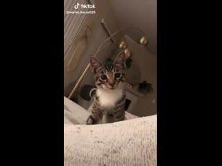 The best tiktok to our day