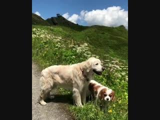 Petite promenade avec les chiens en suisse