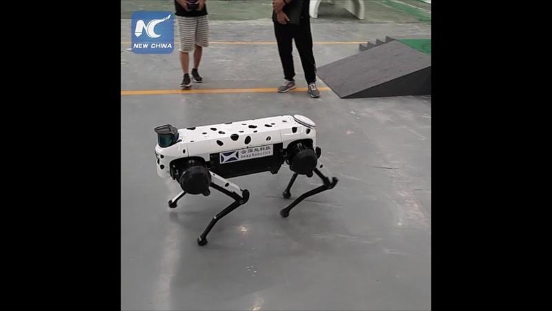 Four-legged robot that can do push-ups