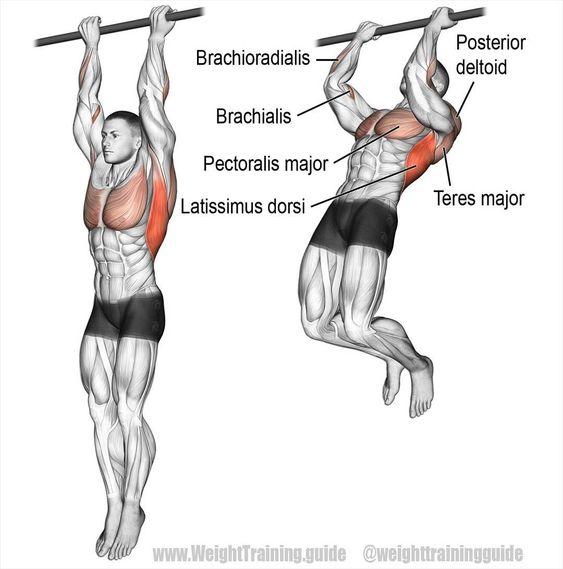 Виды подтягиваний группа мышц в картинках