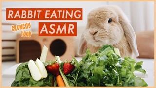 Bunny Eating Crunchy Food ASMR | WahlieTV