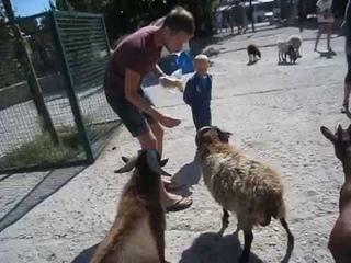 Крым. Нападение голодных свиней и бешеных козлов на Украинских туристов.