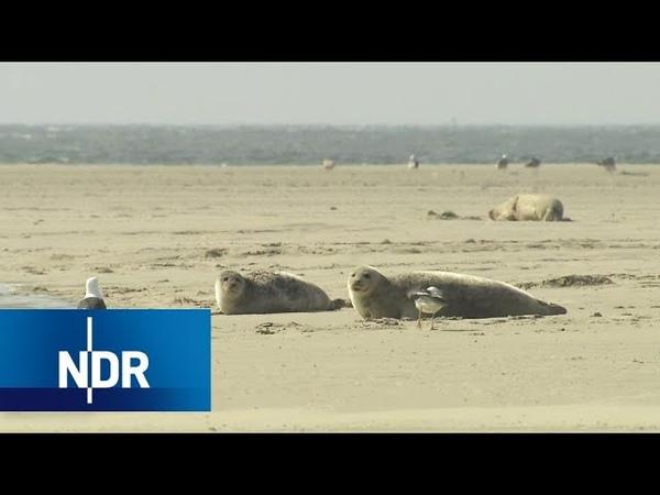 Wildes Borkum: Artenreichtum im Wattenmeer   NaturNah   NDR Doku