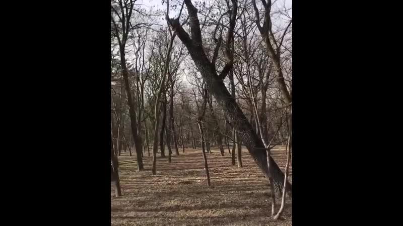 Посмотрите эти 2 видео со звуком Что скажите друзья Последнее время ооочень много жалоб на громкую музыку в парке И именно ок