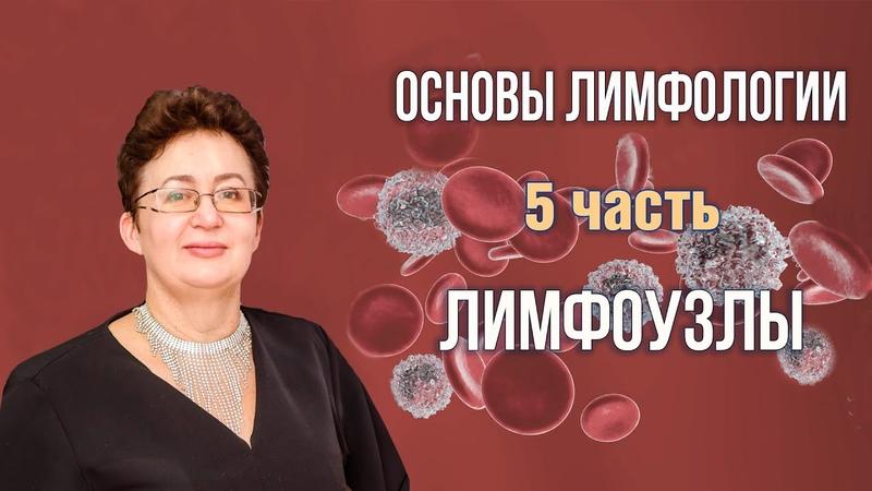 Основы лимфологии Лимфоузлы Шишова Ольга часть 5