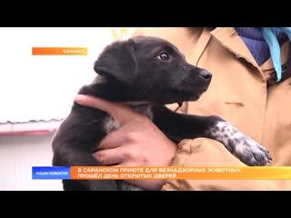 В Саранском приюте для безнадзорных животных прошёл день открытых дверей