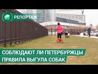Соблюдают ли петербуржцы правила выгула собак на самоизоляции. ФАН-ТВ