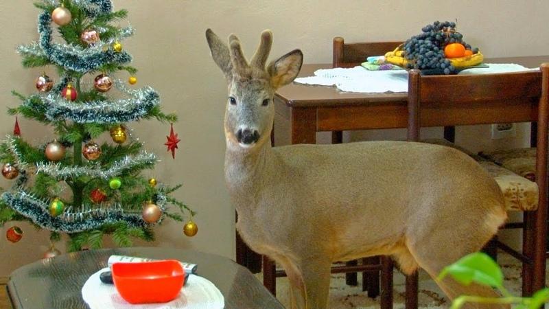 03 01 2020 Nova godina sa srndaćem Bambijem