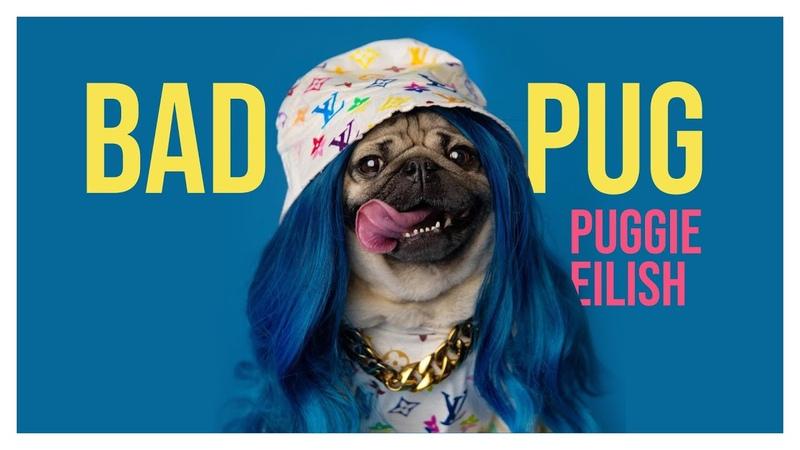I'm The Bad Pug duh Billie Eilish
