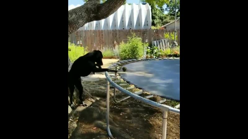 Dog finds joy in the simplest things