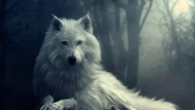 Epic Music - White Wolf Spirit