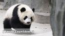 Panda Countdown Sleeping Cutie Panda's Ideal Weekend Cute But iPanda