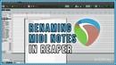 Naming MIDI Notes In REAPER