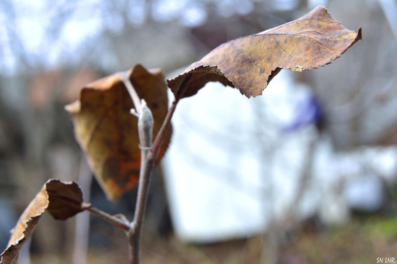 Сухой листочек