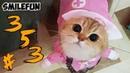 КОТЫ 2020 ПРИКОЛЫ С КОШКАМИ 2020 Смешные Коты и Кошки Funny Cats