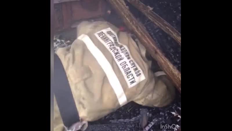 Котенок выжил после пожара