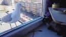 Прикол Кот разговаривает с чайкой. Cat talks to seagull