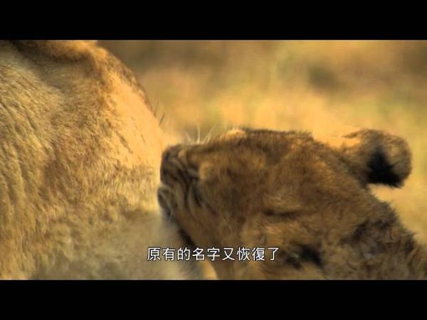 大貓世界 獅界末日