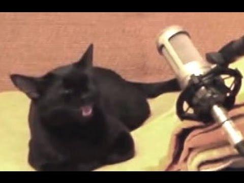 Кошка по имени Луна поет песню вместе с хозяином
