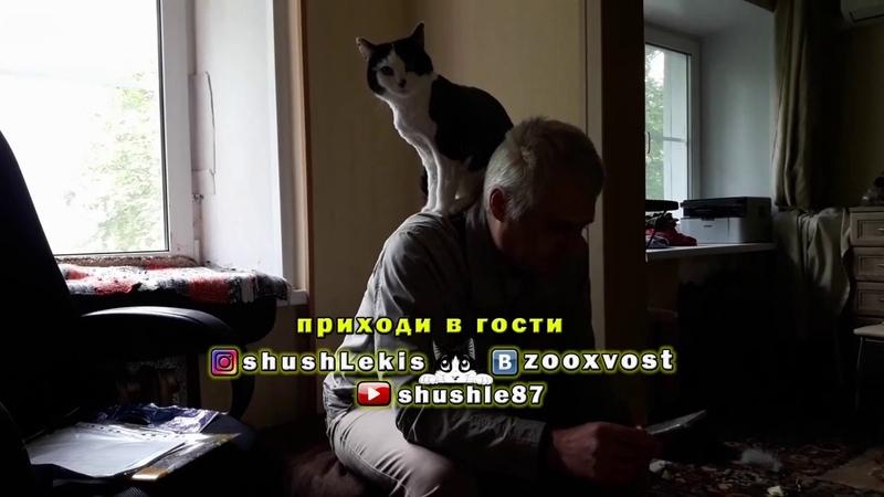 Кто сел на шею гостя - экстрим видео про кота