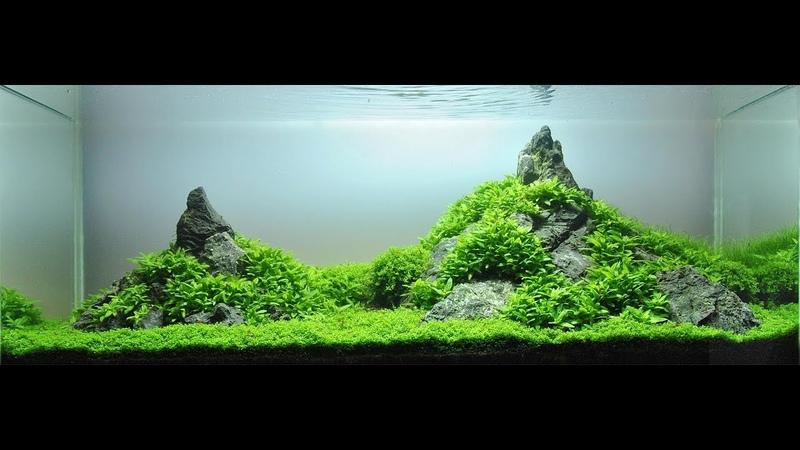 TOP 25 BEST FRESHWATER AQUARIUM - AQUASCAPE SETUP (Desain akuarium air tawar terbaik)