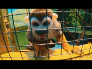 Обезьяна Джеки пытается украсть камеру | Jackie Monkey is trying to steal a camera | 猴子试图偷相机