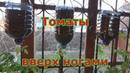 Выращивание помидоров вверх ногами или вниз головой