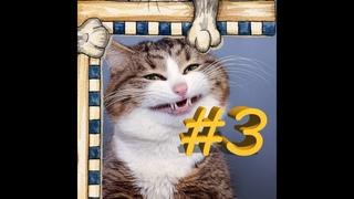 СМЕШНЫЕ КОТЫ Смешная видео нарезка про котов, кошек и котиков 2021! выпуск #3