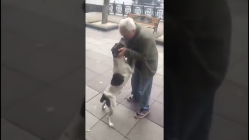 Man found his dog after 3 years ქუჩაში 3 წლის წინ დაკარგული ძაღლი იპოვა ემოცია